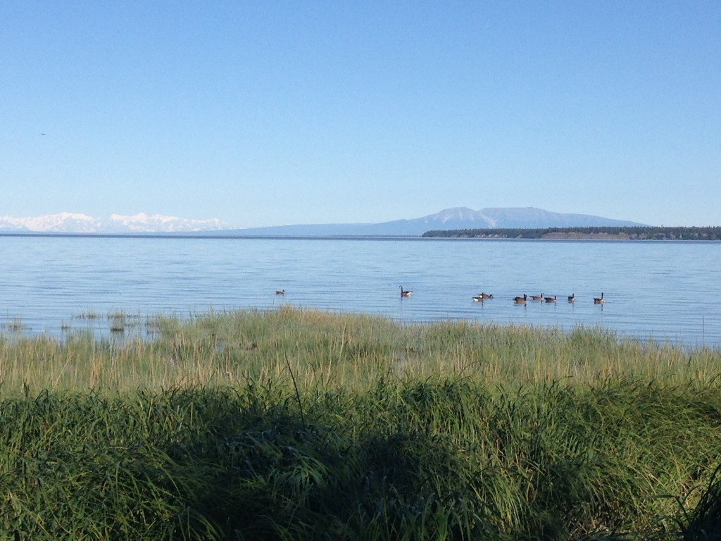 Geese Cook Inlet