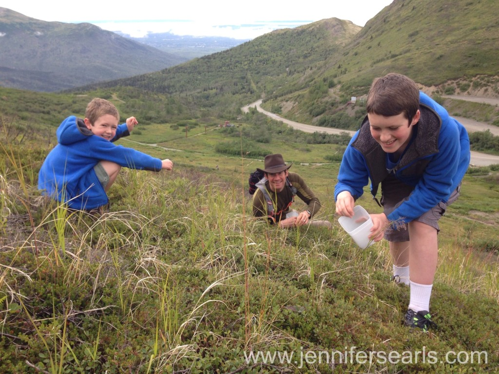 Blueberry Picking Alaska