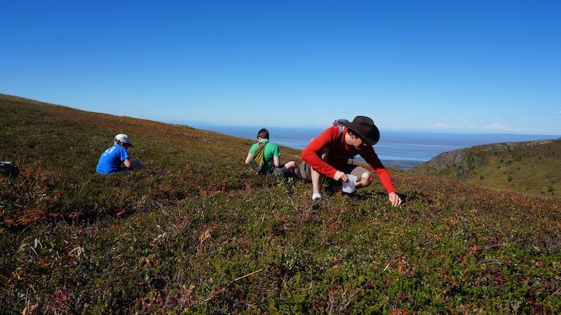 Blueberry Picking Mt Baldy