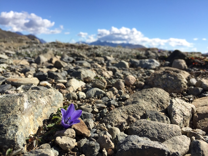 flowers in the scree