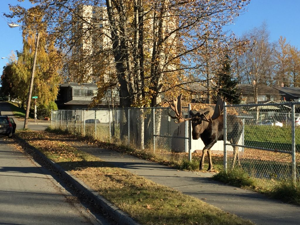 moose leaving inlet view elementary