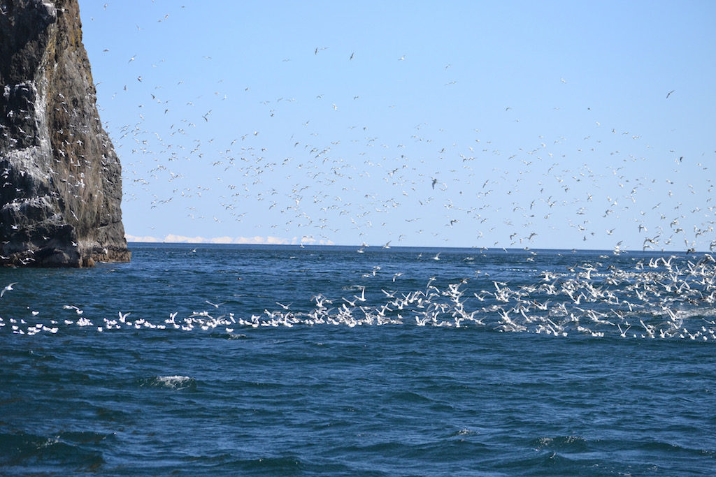grey whale watching cruise _ birds