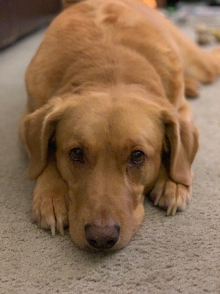 Sorrowful Eyes Dog